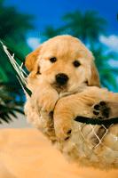 hammockpuppy