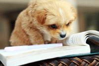 dogbook