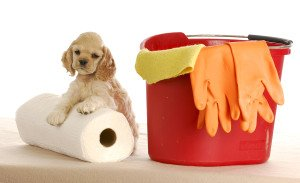 cocker spaniel puppy laying beside bucket and roll of paper towels on white background