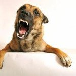 Dog Aggression Can Often Be Treated Through a Combination Approach