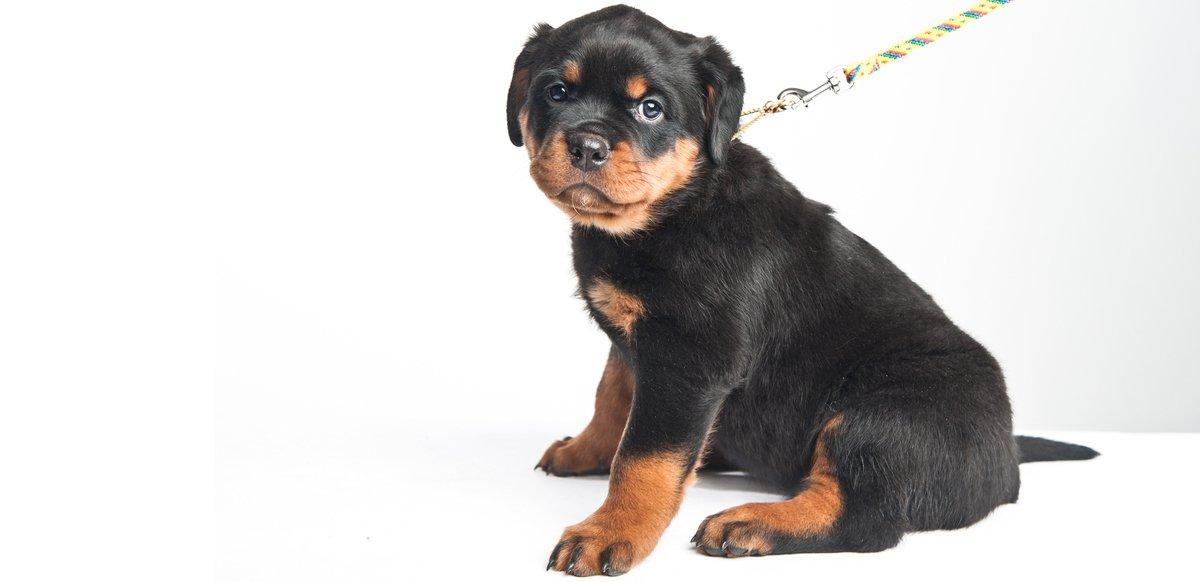 td_puppy_management